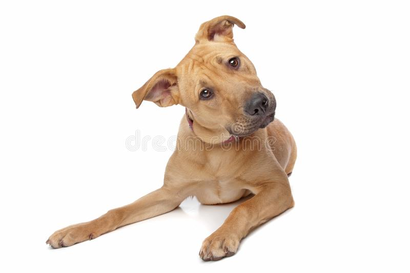 Confused dog royalty free stock photography