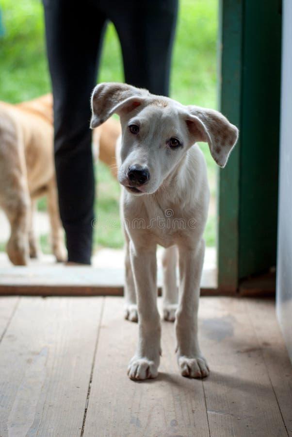 confused hund fotografering för bildbyråer
