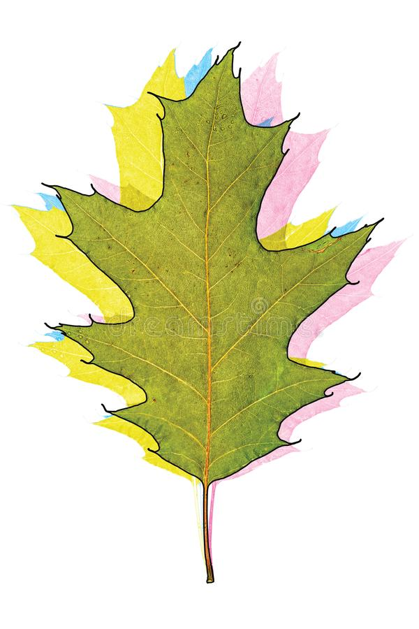 Congé de chêne de Multicolors illustration libre de droits