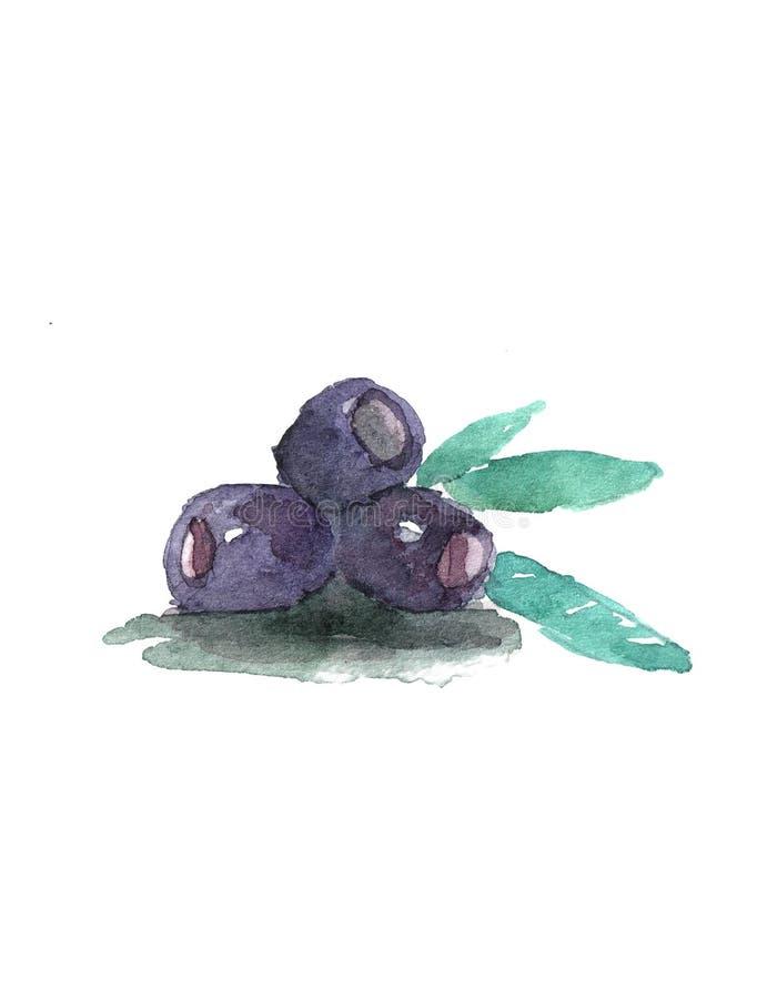 Congé olive du noir trois sur le fond blanc Légumes d'isolement Aquarelle, peinture d'art d'aquarelle, tirée par la main illustration de vecteur