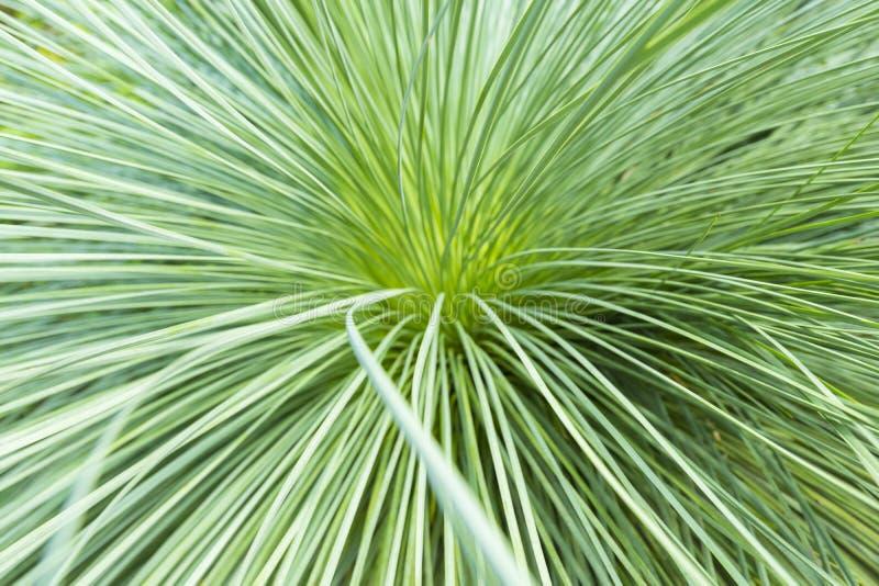 Congé vert de paume dans le jardin photographie stock
