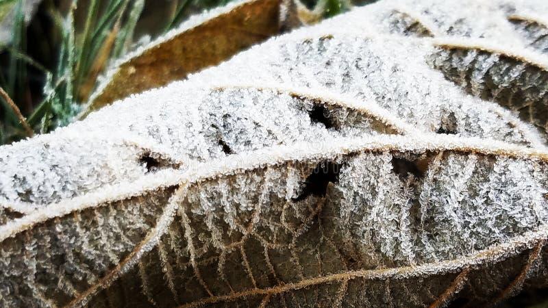 congelé photos stock