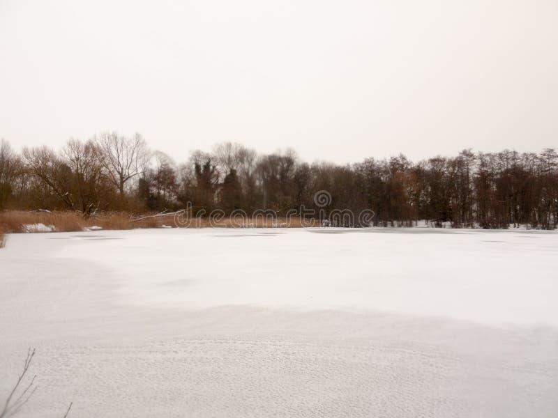 Congelé au-dessus des arbres nus supérieurs d'hiver blanc de neige d'eau de surface de lac photographie stock