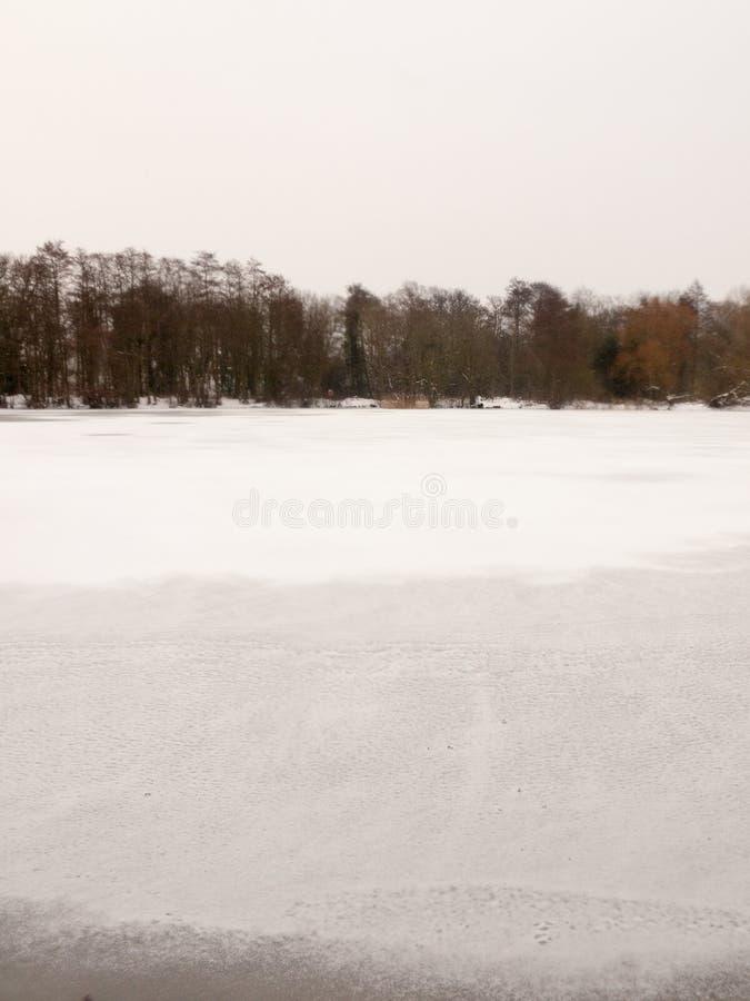 Congelé au-dessus des arbres nus supérieurs d'hiver blanc de neige d'eau de surface de lac photos stock