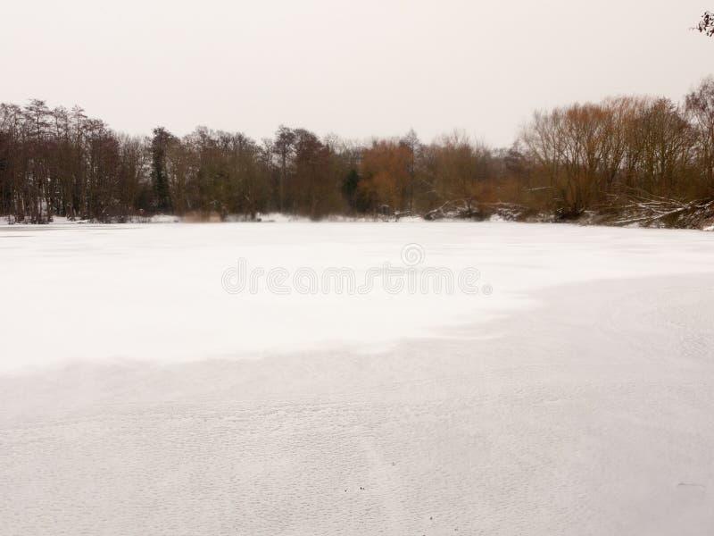 Congelé au-dessus des arbres nus supérieurs d'hiver blanc de neige d'eau de surface de lac images libres de droits