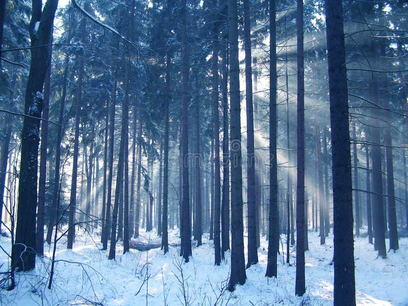 Congelado foto de archivo libre de regalías