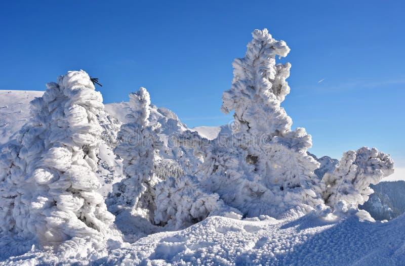 Congelado en la montaña imagen de archivo