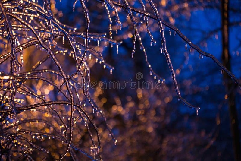 Congelado en las ramas del hielo fotos de archivo libres de regalías