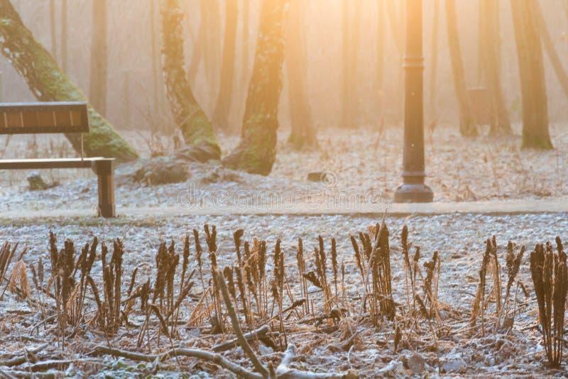 Congelado plats e um banco gelado em um parque durante um sunr frio do inverno imagens de stock