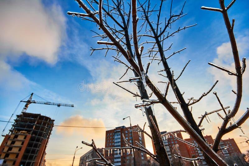 Congelado sobre árvores no fundo de uma cidade do inverno imagem de stock royalty free