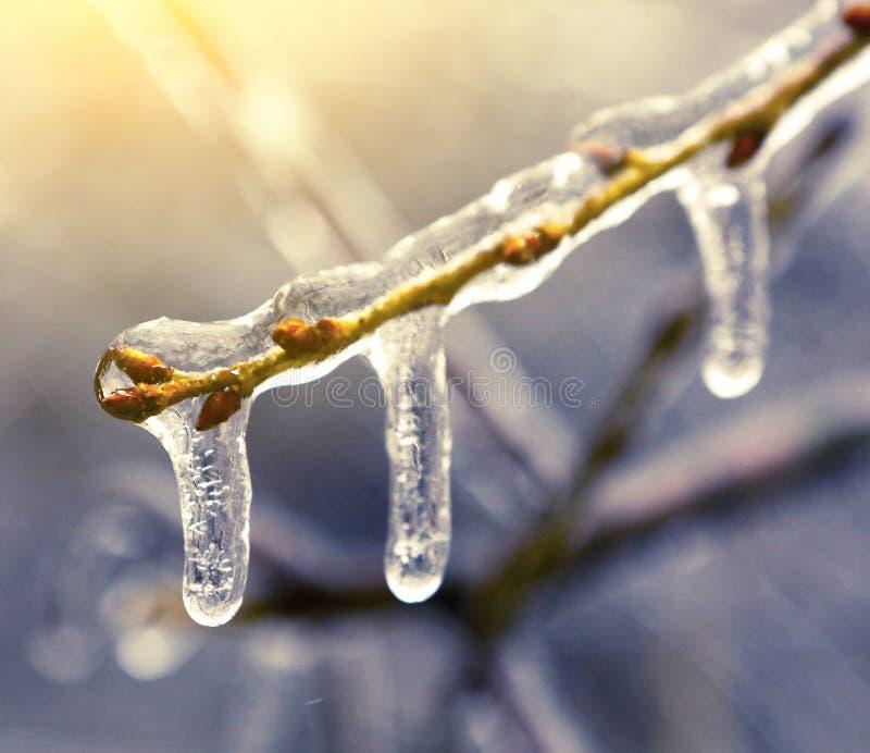Congelato nei rami di albero del ghiaccio, alberi ghiacciati fotografia stock