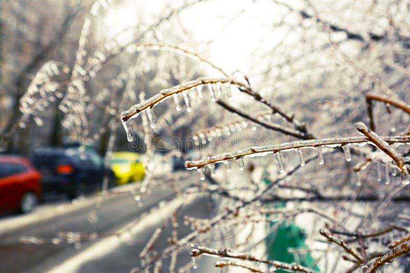 Congelato nei rami di albero del ghiaccio, alberi ghiacciati immagine stock