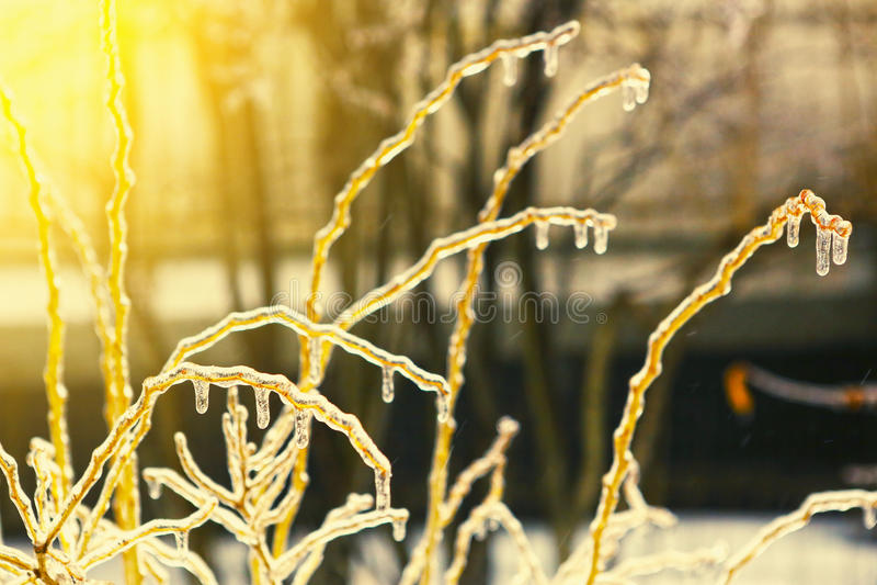 Congelato nei rami di albero del ghiaccio, alberi ghiacciati fotografia stock libera da diritti