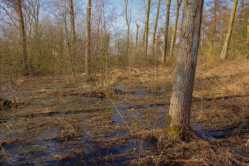Congele no assoalho da floresta em um dia de inverno ensolarado imagem de stock royalty free
