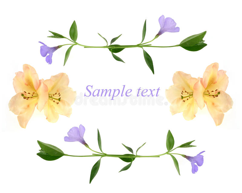 Download Congratulation Card - Flowers Background Stock Image - Image: 11827341