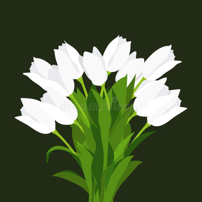 Congratulatory bouquet of white tulips, painted by hand, on a black background. stock illustration