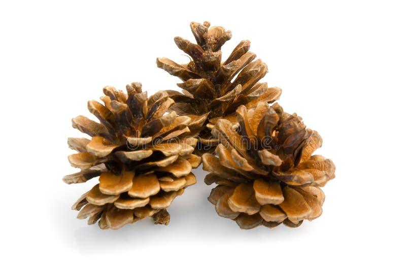 Coni del pino di Brown immagine stock