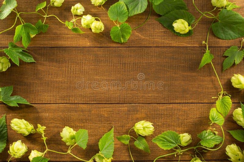 Coni di luppolo su legno fotografia stock libera da diritti