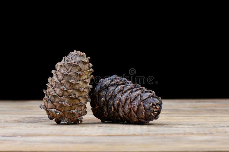Coni siberiani del cedro di taiga su una tavola di legno Resina del cedro su un urto fotografia stock