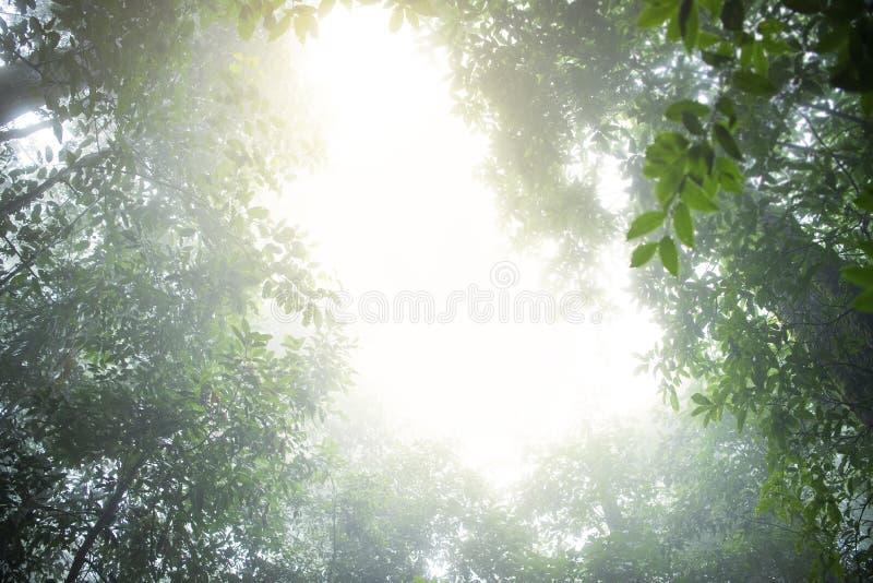 Conifères à feuilles persistantes enveloppés sous la brume et la pluie dans une vue scénique de paysage image libre de droits