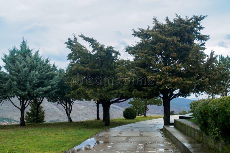 Conifères à feuilles persistantes et un chemin humide en parc après la pluie contre le contexte des montagnes et du ciel obscurci photos libres de droits