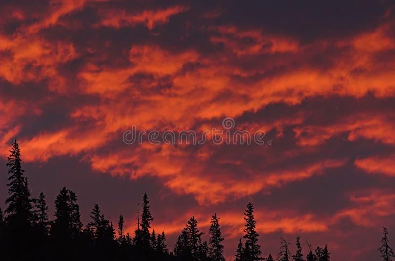 Conifères et ciel d'incendie photographie stock libre de droits