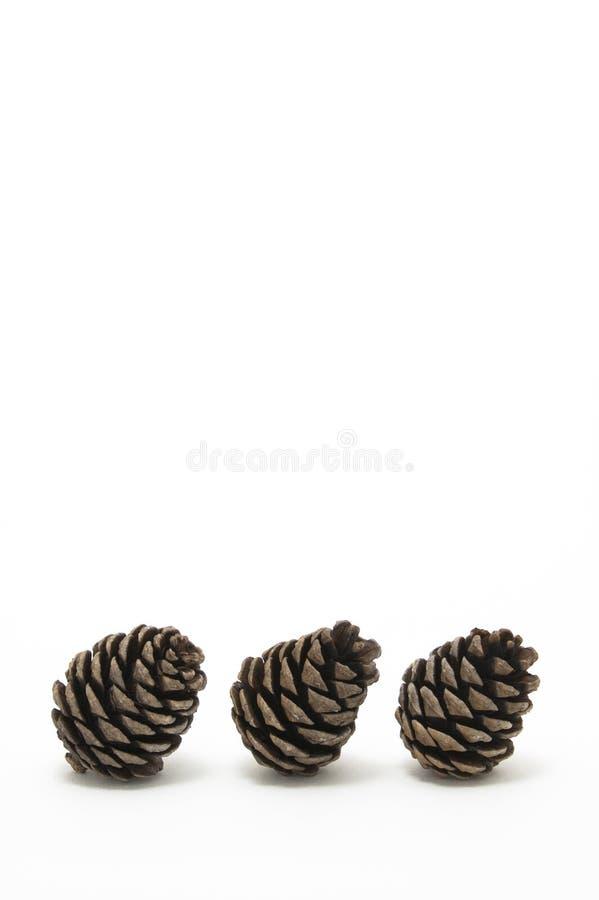 Download Conifer конуса стоковое фото. изображение насчитывающей партия - 18391412