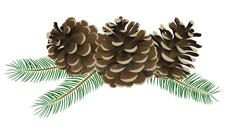 Conifer cone stock illustration