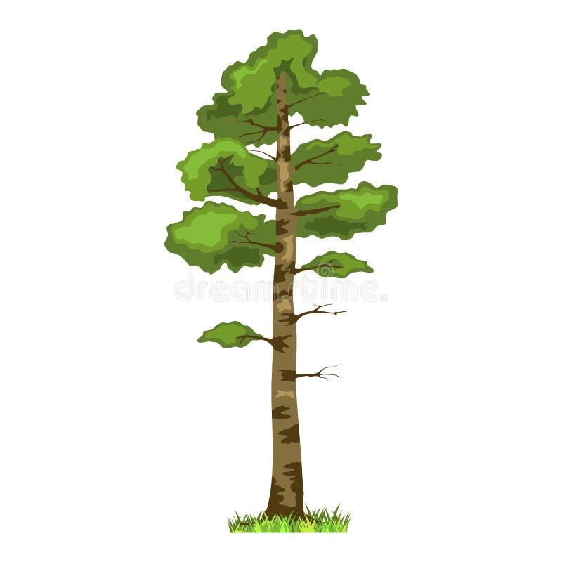 Conifer drzewo w cztery sezonach - wiosna, lato, jesień, zima Natura i Ekologia Kreskówka stylu zieleni drzewa ilustracja ilustracja wektor