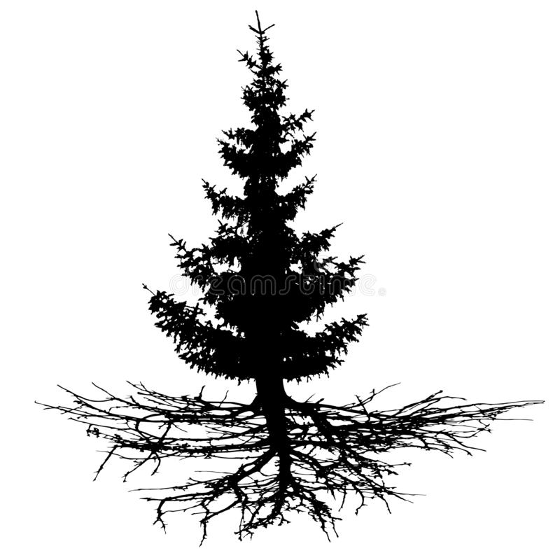Conifer drzewo z korzeniami, wektorowa sylwetka royalty ilustracja