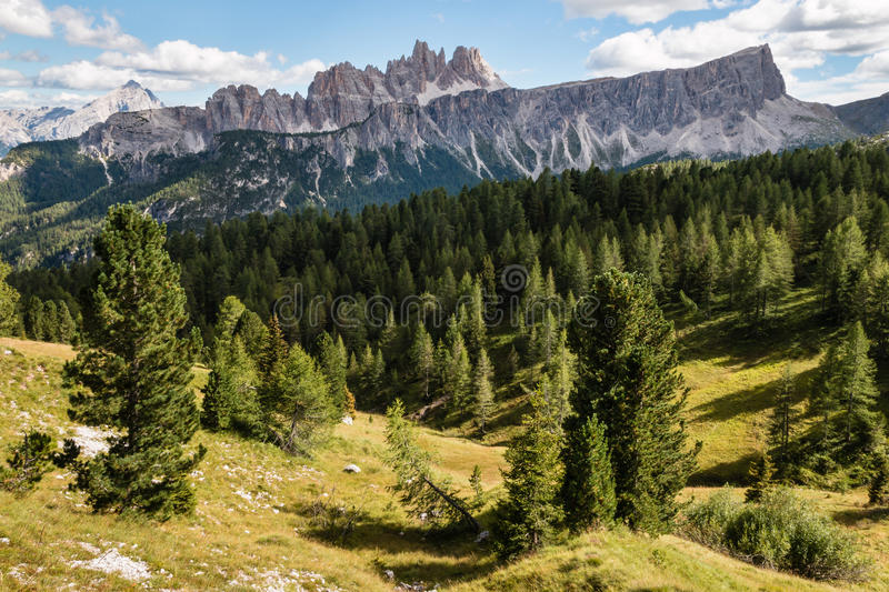 Conifer forest at Croda da Lago massif in South Tyrol Dolomites royalty free stock images
