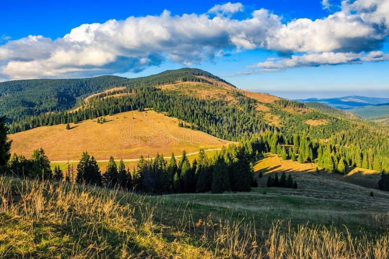Conifer las w klasycznym Karpackiej góry doliny krajobrazie fotografia stock