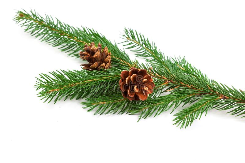 Conifer tree branch isolated. Nature Symbol of Christmas and Ne. W Year on white background stock images