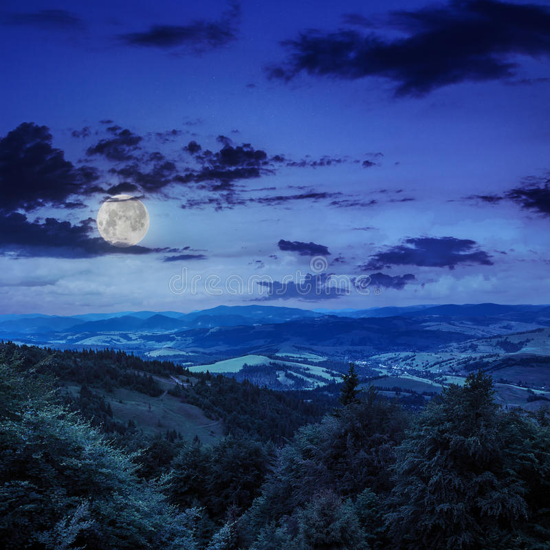 Coniferous лес на наклоне горы на ночу стоковые изображения
