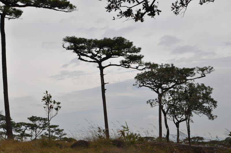 Coniferous лес стоковые изображения rf