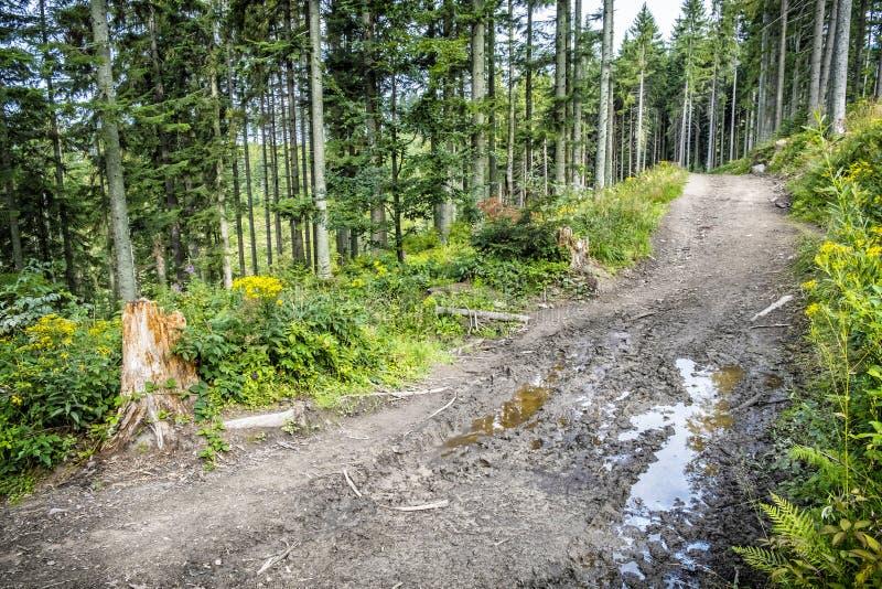 Coniferous forest, Babia hora, Orava, Slovakia royalty free stock photos