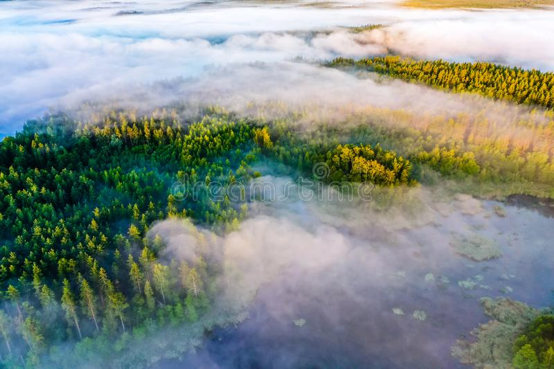 Coniferous forest surrounded by blue lakes, aerial landscape. Aerial scenery. Beautiful morning stock photos
