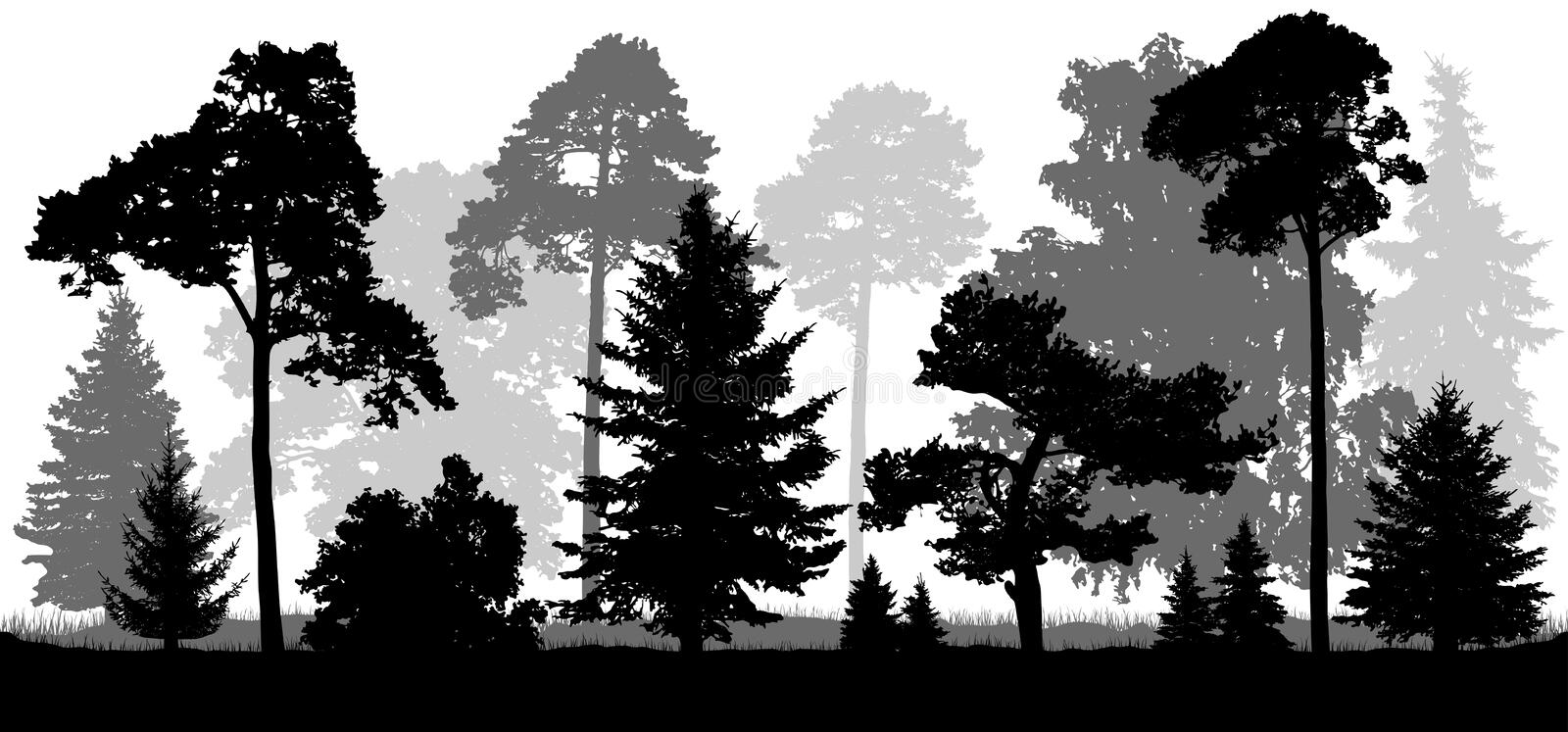 Coniferous forest trees set silhouette. Background of nature.  royalty free illustration