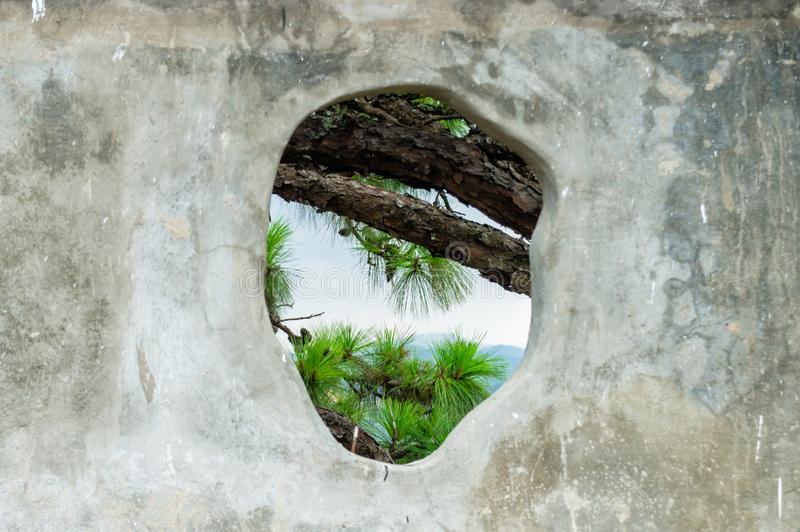 Coniferous tree branches through a hole in the stone wall royalty free stock photo