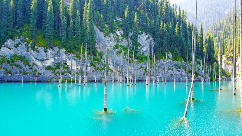 Coniferous tree trunks rise from the depths of a mountain lake with blue water. royalty free stock photography