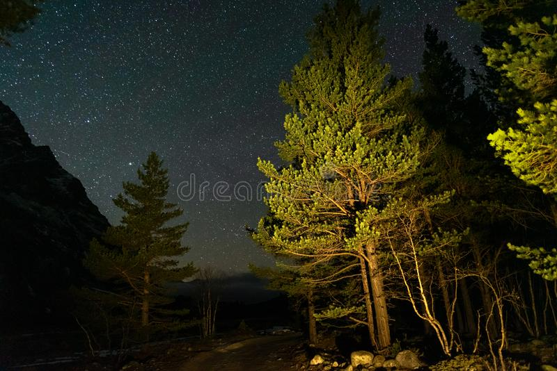 Coniferous trees with mountain gorge at night under a starry sky royalty free stock photography