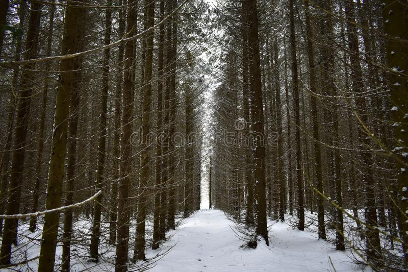 This coniferous winter forest is incredible, it attracts people with its mystery. Here every twig and every Bush seemed to gather. All the beauty of winter stock images