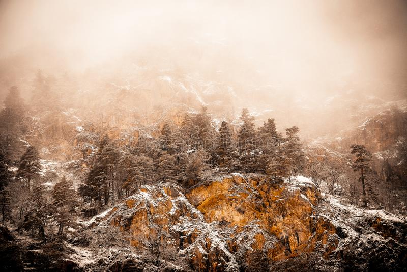 Conifers on a rocky mountain in the fog. Russia Caucasus Teberda royalty free stock photos