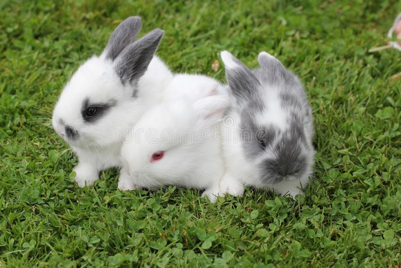 Conigli del bambino in erba fotografia stock