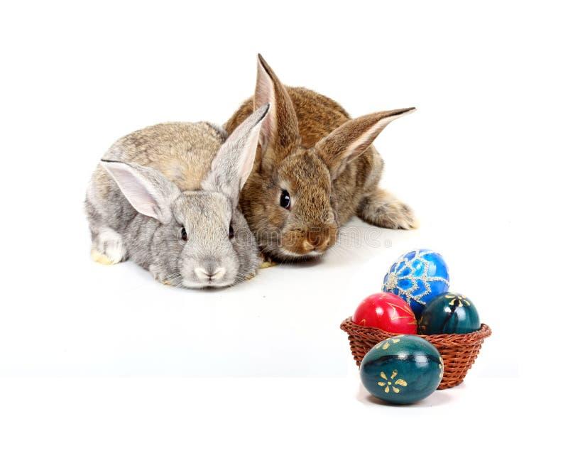 Conigli di Pasqua fotografia stock libera da diritti