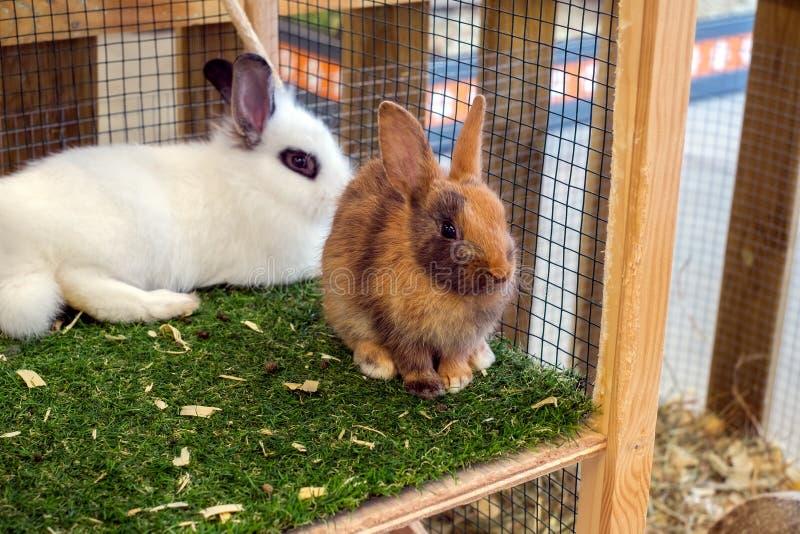 Conigli nella gabbia fotografia stock