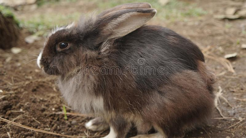 Conigli selvaggi, animale, immagine stock