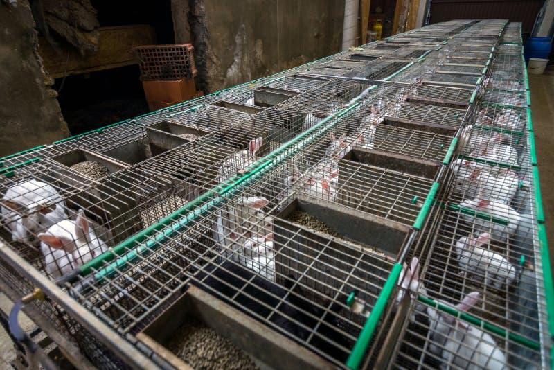 Conigli sull'azienda agricola fotografia stock