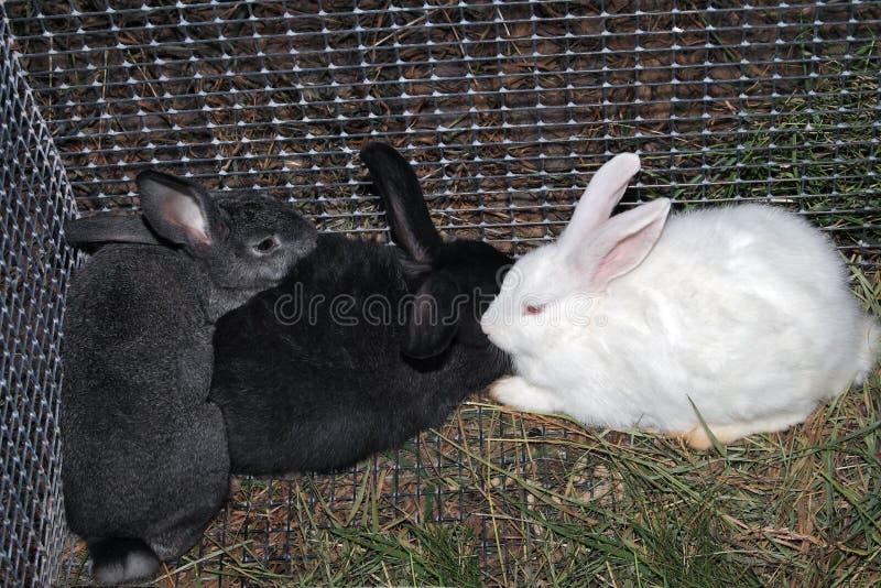 Conigli in una gabbia fotografia stock libera da diritti
