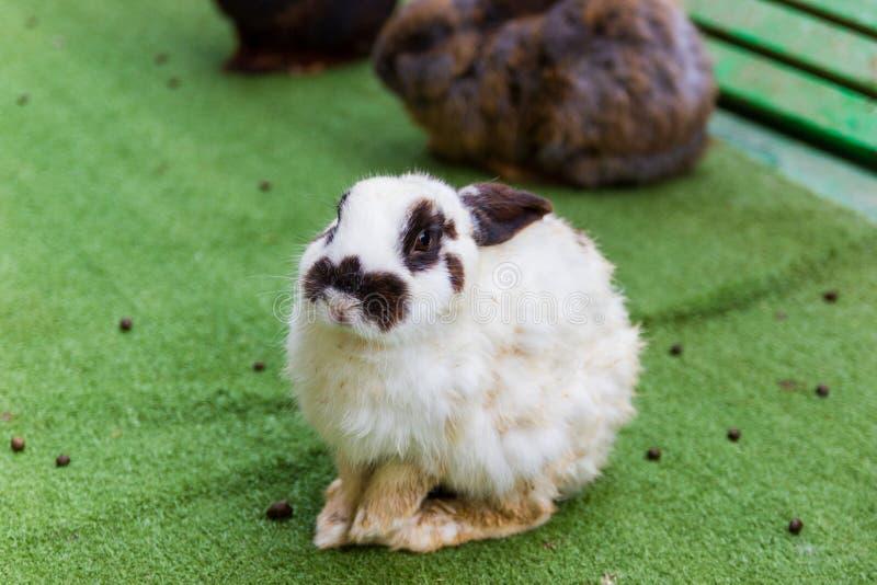 Conigli in una gabbia ad uno zoo immagine stock libera da diritti